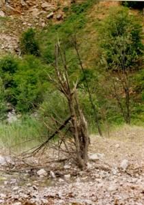 1993.00.00-Rudná_stromky